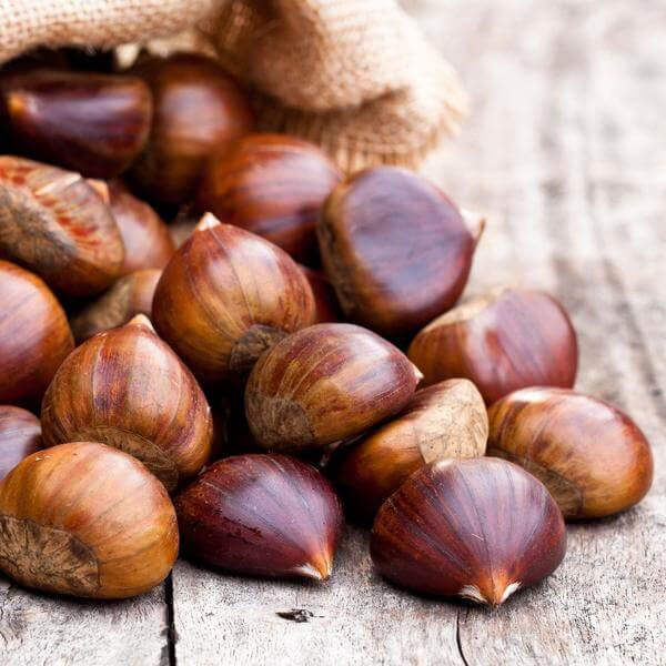 Horse Chestnut Oil (Infused)