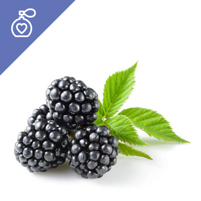 Blackberry Fragrance | High Quality Fragrances in Turkey