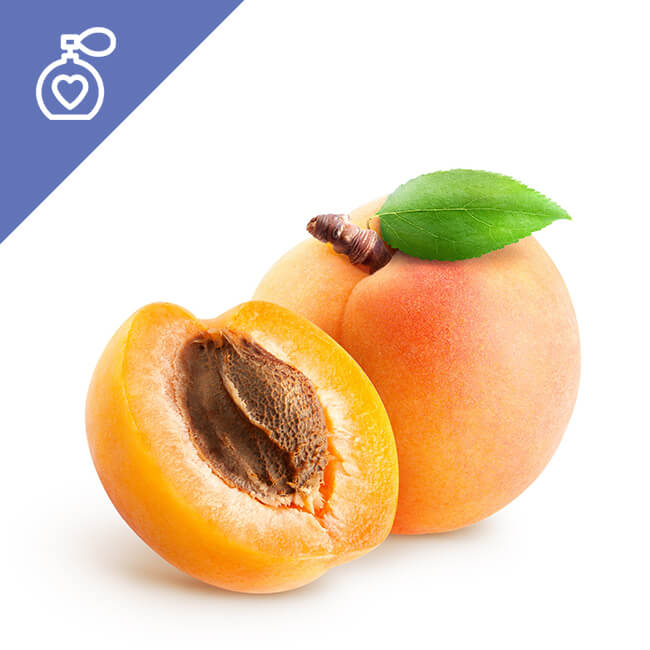 Apricot Fragrance