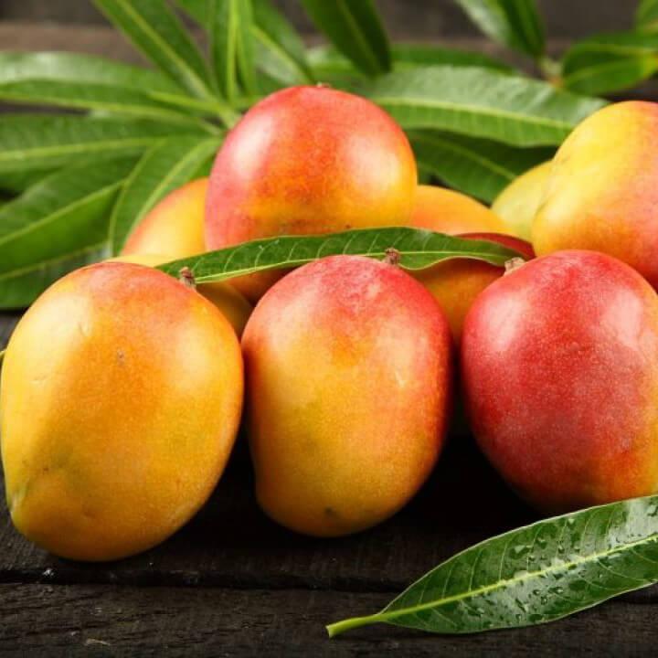 Mango yağı satışı