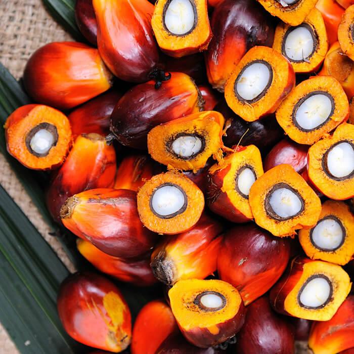 Palm yağı satışı