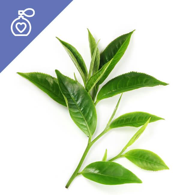 Yeşil Çay Esansı