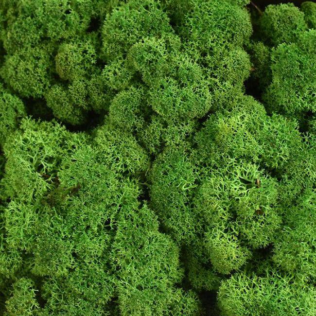 Moss Oil