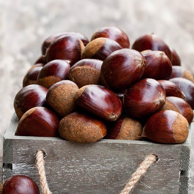 Horse Chestnut Oil (Cold Pressed)